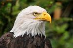Eagle Ears